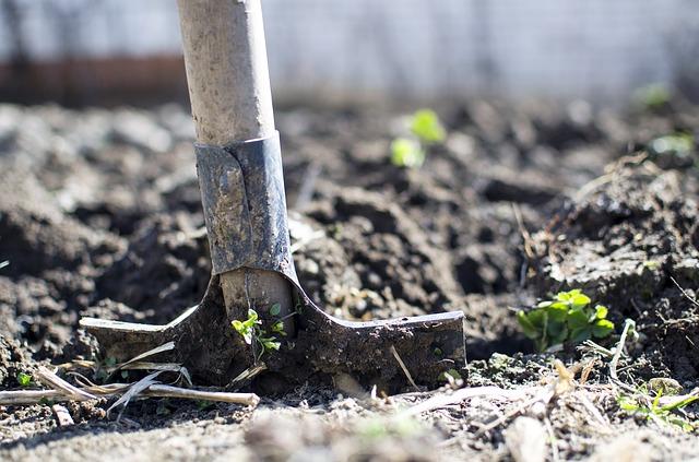 Pěstování ovoce a rostlin na zahradě