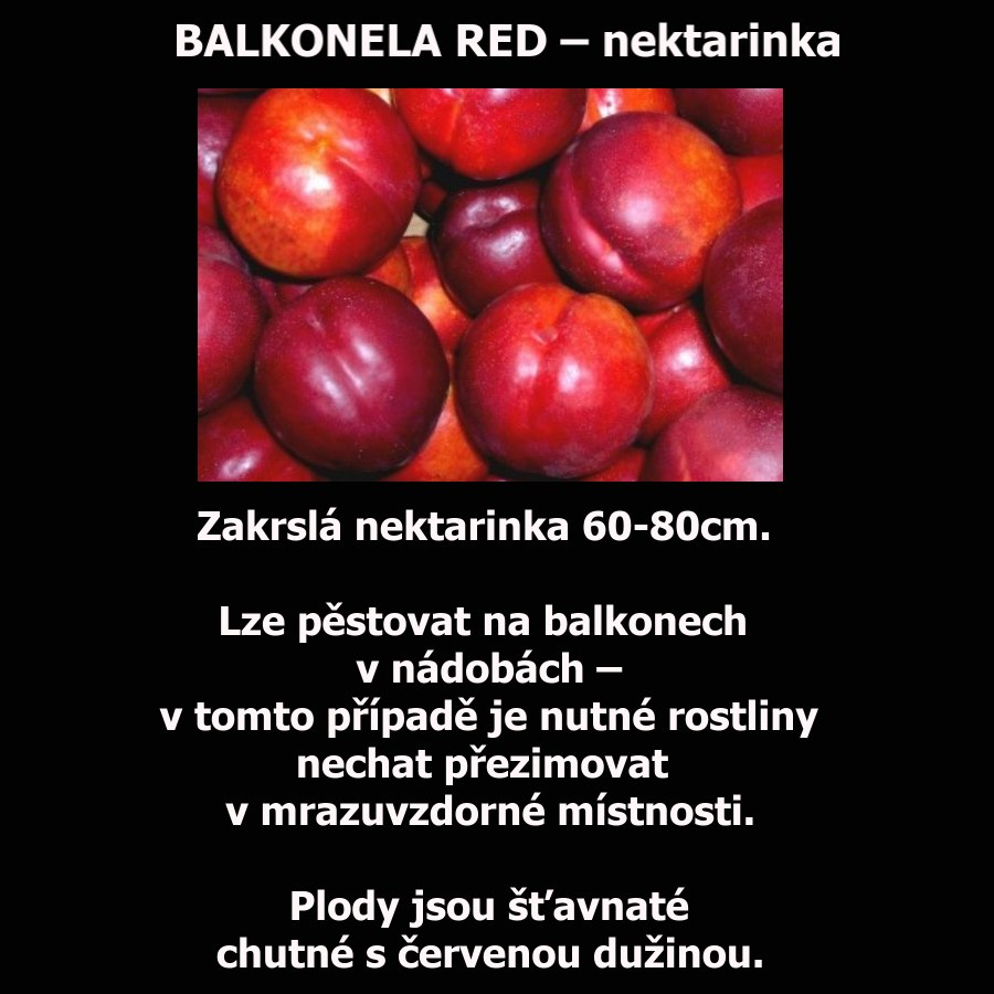 BALKONELA RED – NEKTARINKA